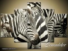Obraz na zeď-zvířata- 5D F000695