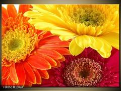 Obraz flora -F000514