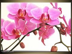Obraz flora