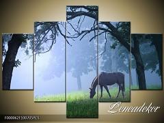 Obraz na zeď 5D F000062