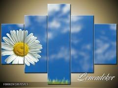 Obraz na zeď 5D F000029