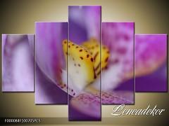 Obraz na zeď-květy- 5D F000084