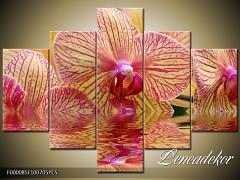 Obraz na zeď-květy- 5D F000085