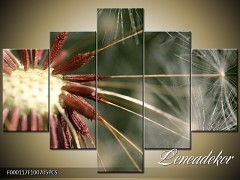 Obraz na zeď-květy- 5D F000117
