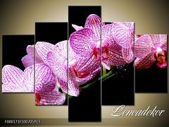 Obraz na zeď-květy- 5D F000171