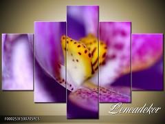 Obraz na zeď-květy- 5D F000253