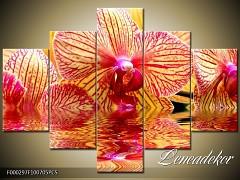 Obraz na zeď-květy- 5D F000297