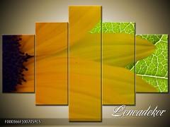 Obraz na zeď-květy- 5D F000366