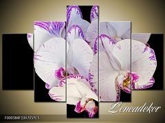 Obraz na zeď-květy- 5D F000384