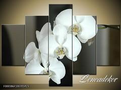 Obraz na zeď-květy- 5D F000386