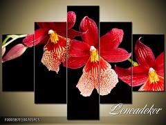 Obraz na zeď-květy- 5D F000387
