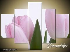 Obraz na zeď-květy- 5D F000389
