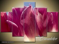 Obraz na zeď-květy- 5D F000390