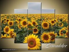 Obraz na zeď-květy- 5D F000397