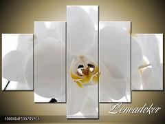 Obraz na zeď-květy- 5D F000404