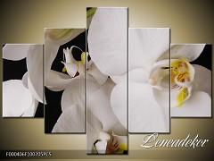 Obraz na zeď-květy- 5D F000406
