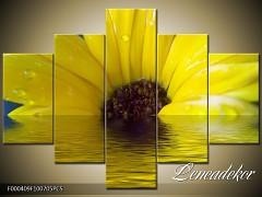 Obraz na zeď-květy- 5D F000409