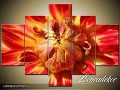 Obraz na zeď-květy- 5D F000469