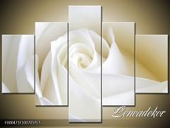 Obraz na zeď-květy- 5D F000471