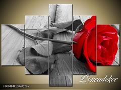 Obraz na zeď-květy- 5D F000484