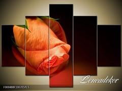 Obraz na zeď-květy- 5D F000488