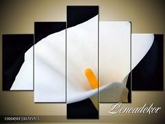 Obraz na zeď-květy- 5D F000490