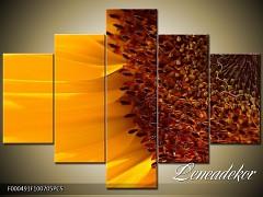 Obraz na zeď-květy- 5D F000491