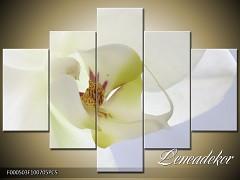 Obraz na zeď-květy- 5D F000503