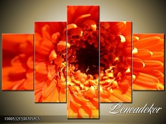 Obraz na zeď-květy- 5D F000512