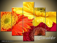 Obraz na zeď-květy- 5D F000514