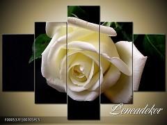 Obraz na zeď-květy- 5D F000537