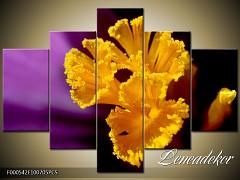 Obraz na zeď-květy- 5D F000542
