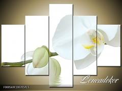 Obraz na zeď-květy- 5D F000569