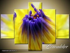 Obraz na zeď-květy- 5D F000590