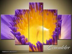 Obraz na zeď-květy- 5D F000591
