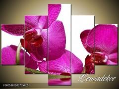 Obraz na zeď-květy- 5D F000598