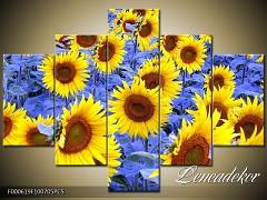 Obraz na zeď-květy- 5D F000619