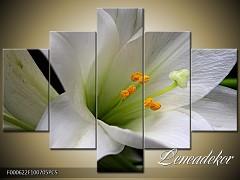 Obraz na zeď-květy- 5D F000622