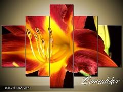 Obraz na zeď-květy- 5D F000628