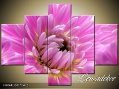 Obraz na zeď-květy- 5D F000642