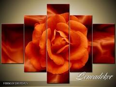 Obraz na zeď-květy- 5D F000653