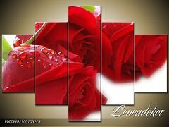 Obraz na zeď-květy- 5D F000668