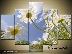 Obraz na zeď-květy- 5D F000680