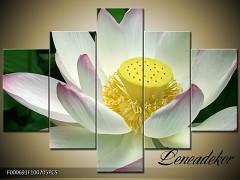 Obraz na zeď-květy- 5D F000691