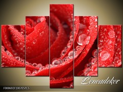 Obraz na zeď-květy- 5D F000692