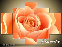 Obraz na zeď-květy- 5D F000693