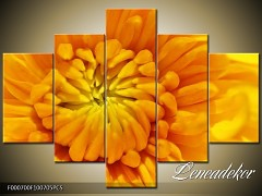 Obraz na zeď-květy- 5D F000700