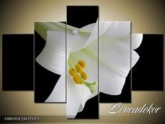 Obraz na zeď-květy- 5D F000703