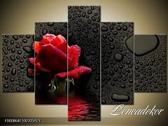 Obraz na zeď-květy- 5D F000864