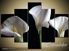 Obraz na zeď-květy- 5D F000890